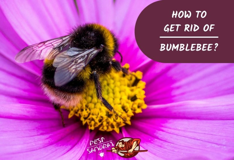 How To Get Rid of Bumblebee