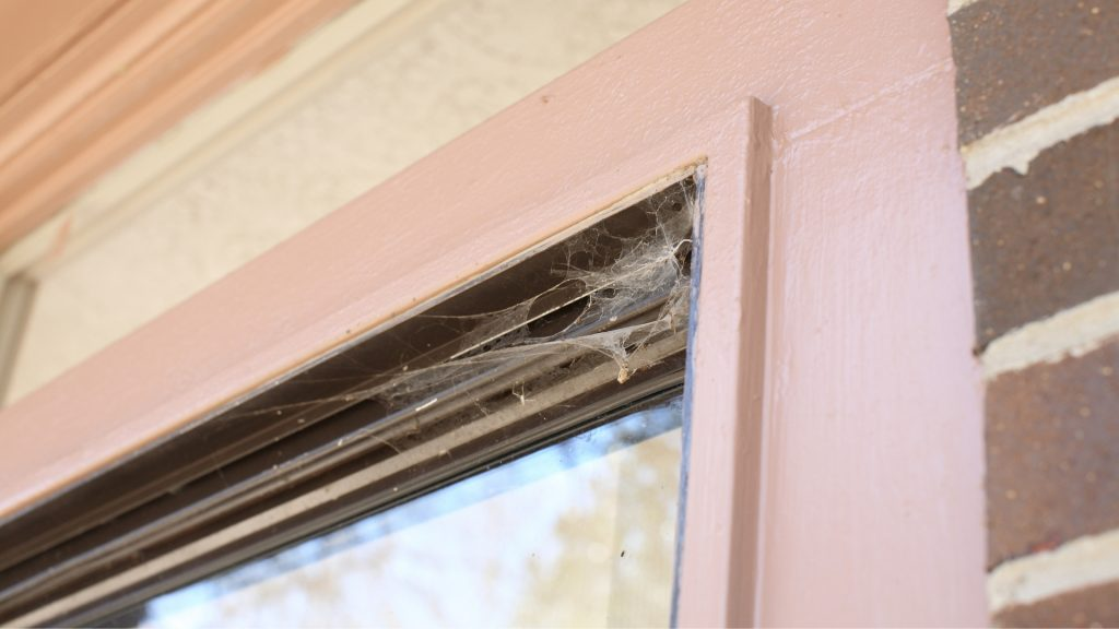 How To Get Rid of Spider Nests on Windows