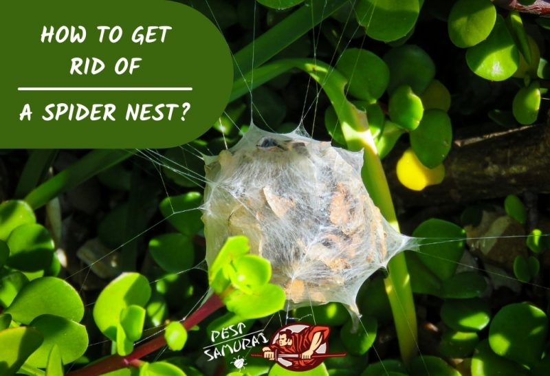 How To Get Rid of a Spider Nest