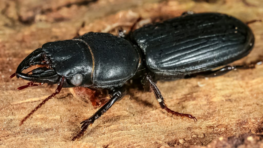 What Are Wood-Boring Insects