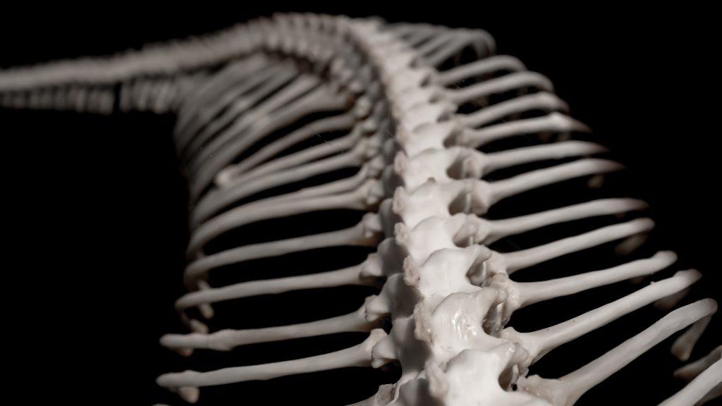 What Do Snake Bones Look Like
