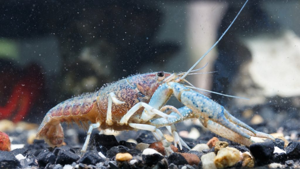Where Do Shrimp Come From