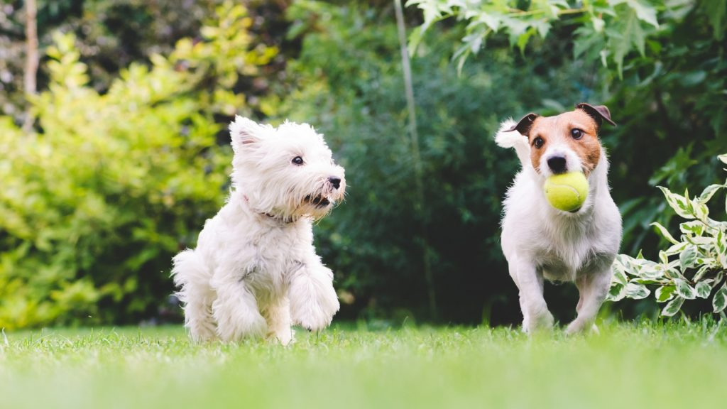 Are Mosquito Foggers Safe for Pets