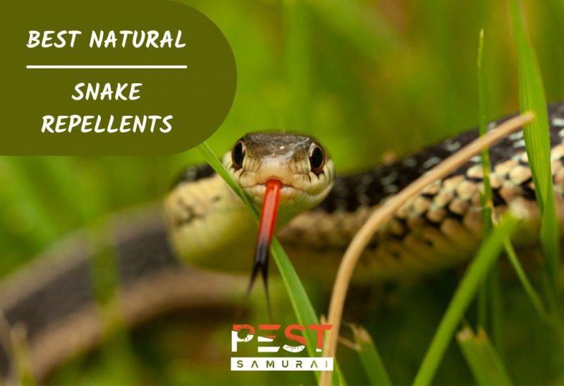 Best Natural Snake Repellents