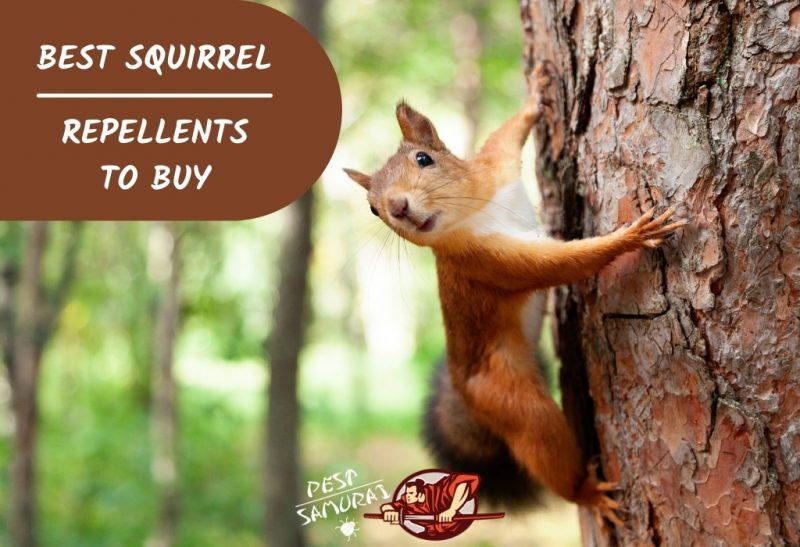Best Squirrel Repellents to Buy