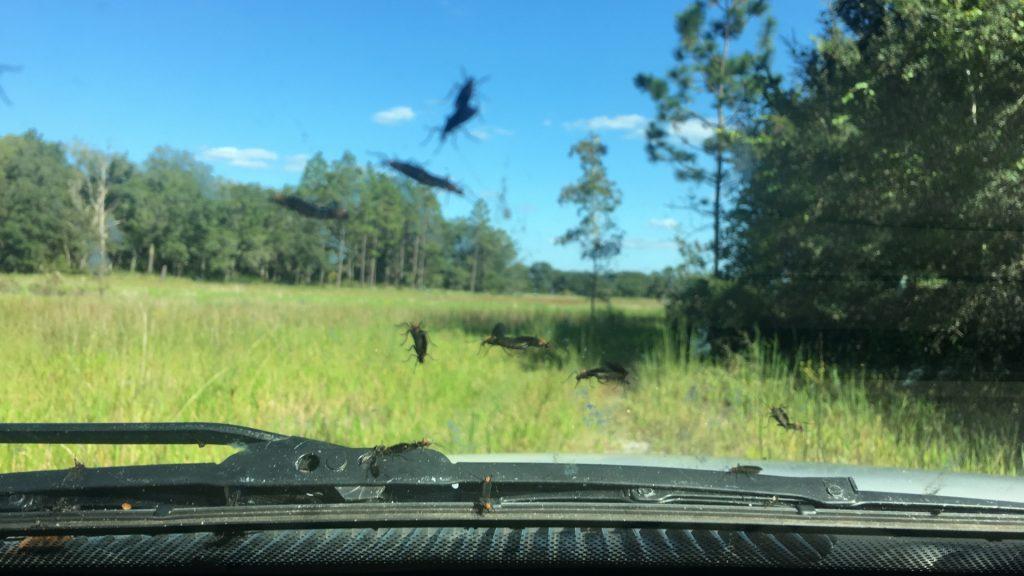 Best Way To Clean Lovebugs off Windshield