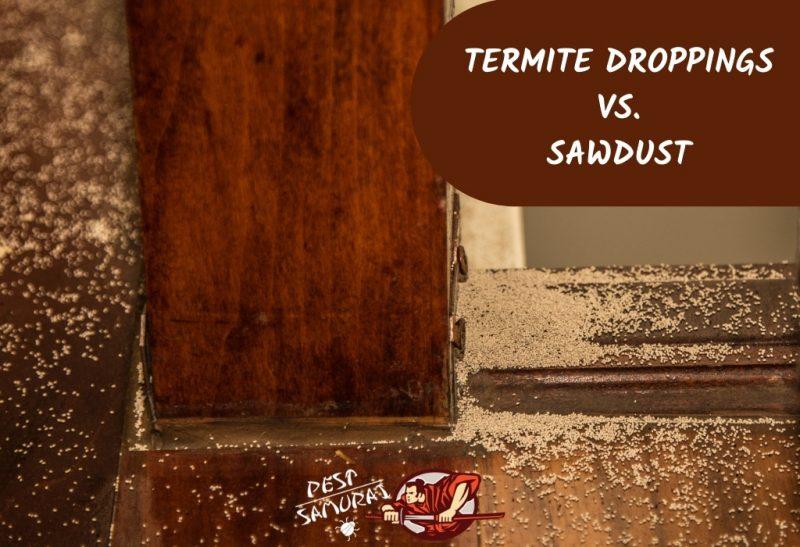Differences Between Termite Poop and Sawdust1