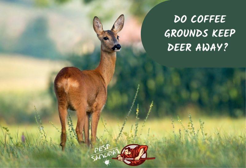 Do Coffee Grounds Keep Deer Away