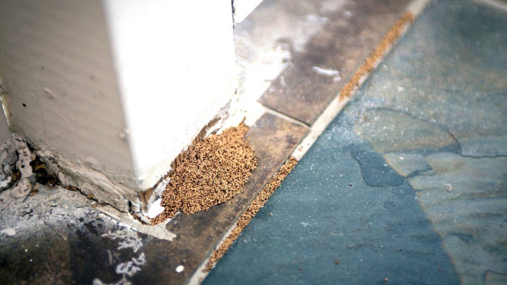 Do Termites Leave Sawdust Behind
