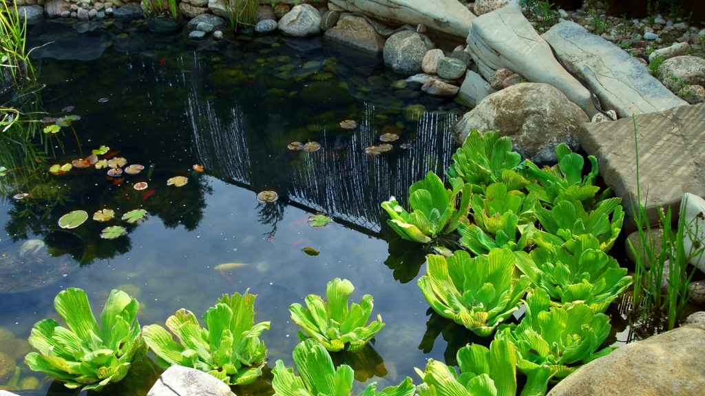 How To Get Rid of Mosquito Larvae in Pond