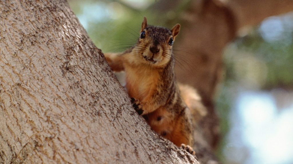 How To Keep Squirrels Away Naturally