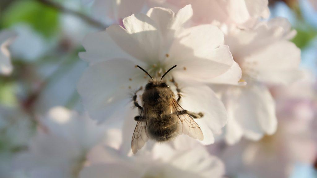 Lifespan of a Bumblebee