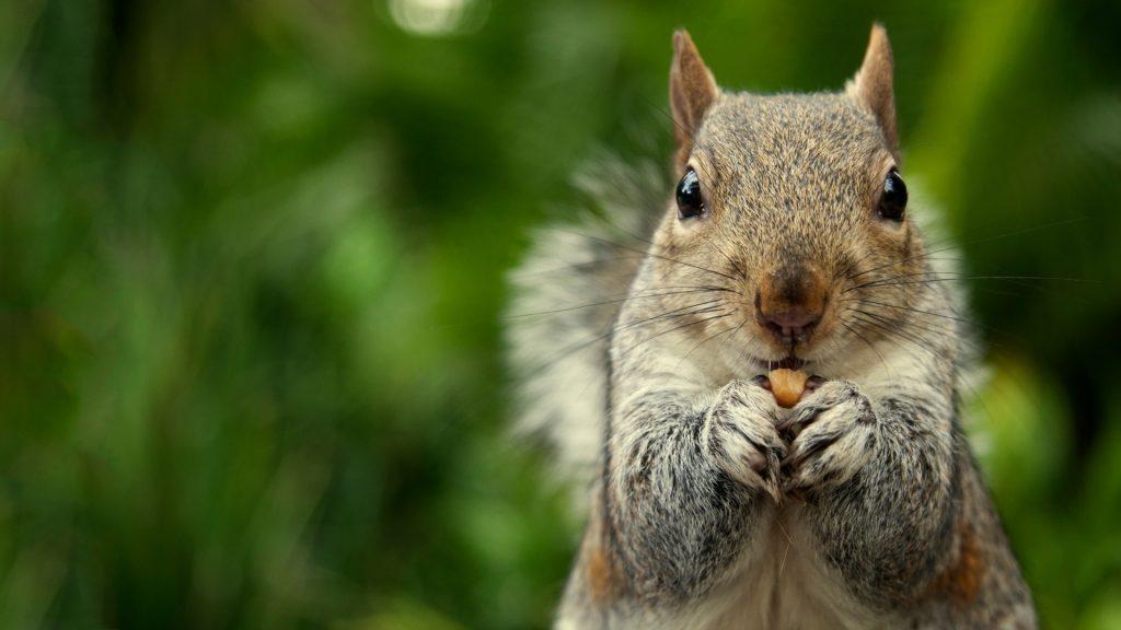 Squirrel Information