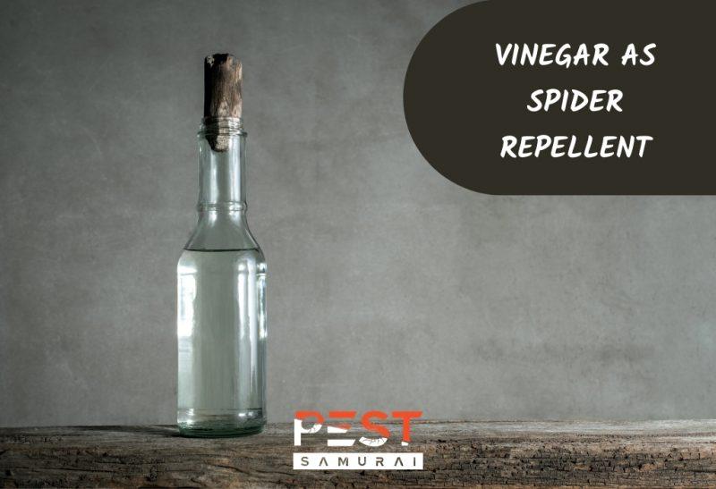 Vinegar As Spider Repellent