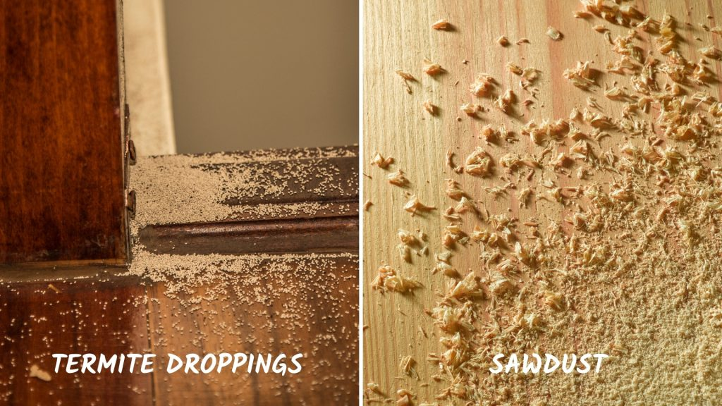 Visual Differences Between Termite Excrements (Frass) and Sawdust