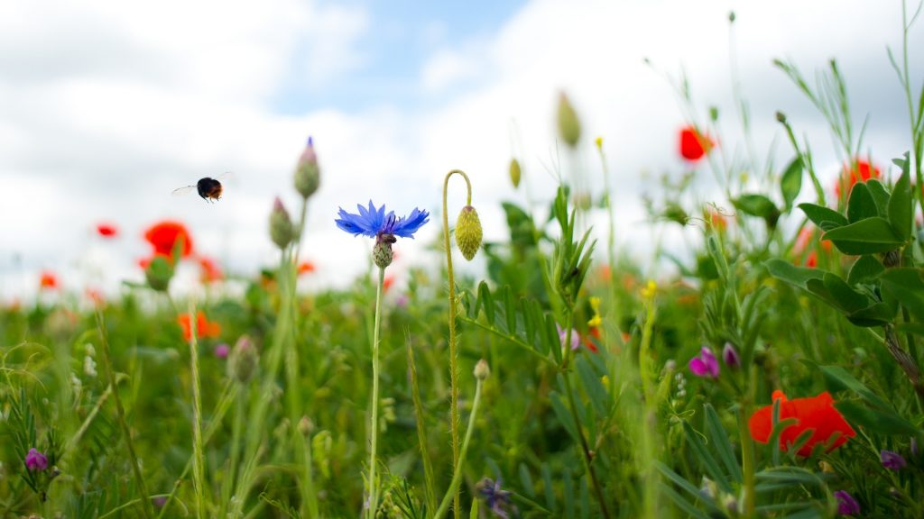 What Ecosystem Do Bumblebees Live In