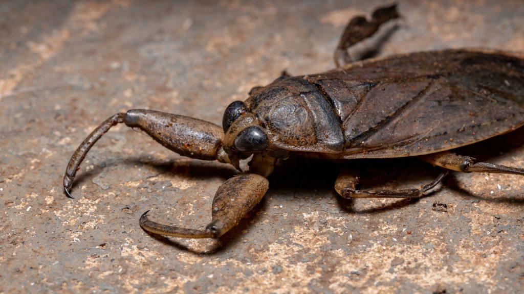 What Is a Waterbug