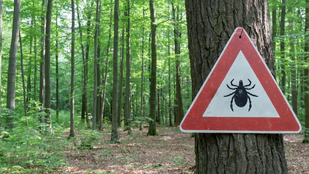 Where Do Ticks Come From