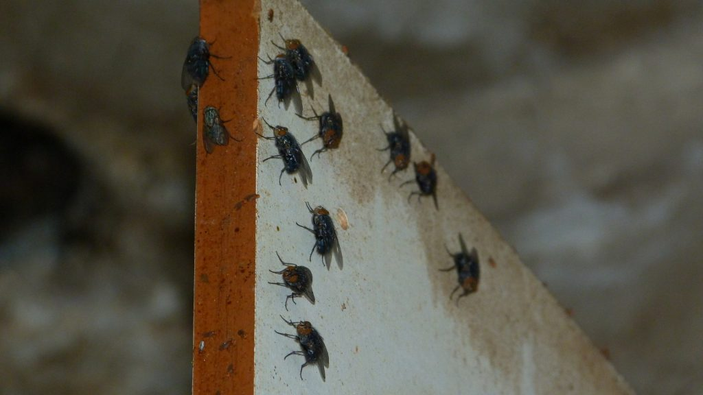 Why Are There So Many Flies in My House