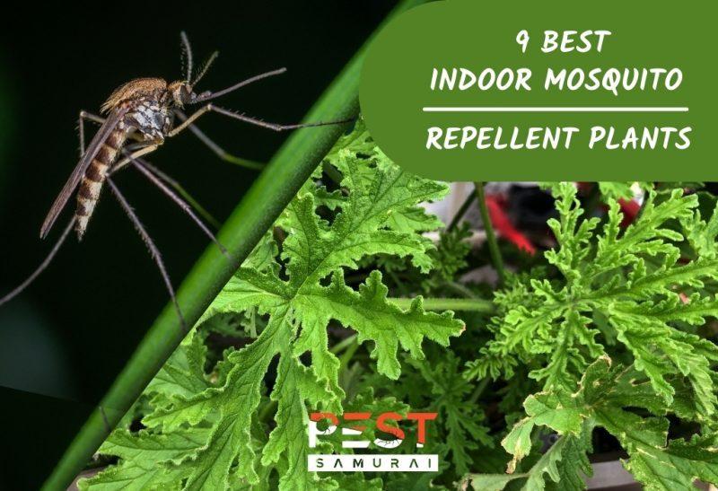 9 Best Indoor Mosquito Repellent Plants.