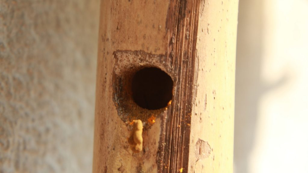 Apply Insecticide Dust and Plugging Holes (2)