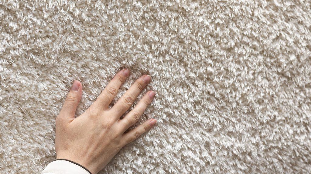 Can Fleas Live in Carpet (1)