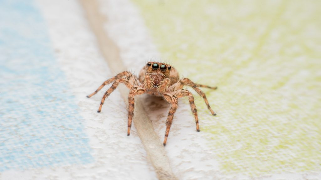 Diatomaceous Earth Kill Spiders