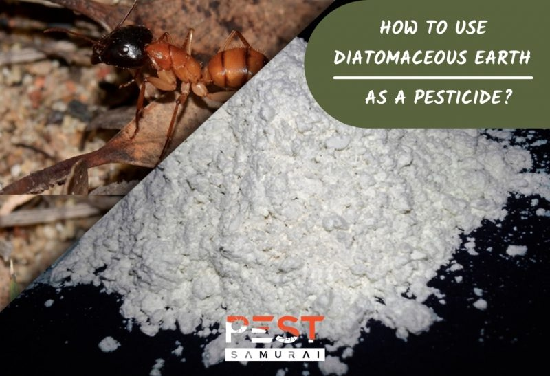 Diatomaceous Earth Uses as a Natural Pesticide