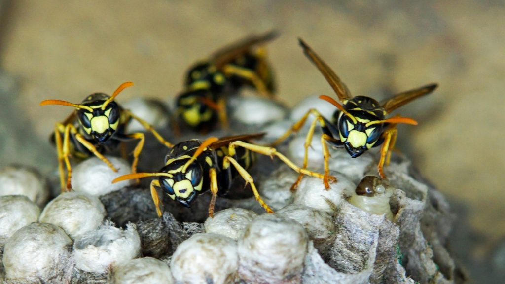 Different Types of Wasps