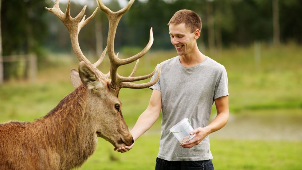 Do Deer Attack Humans