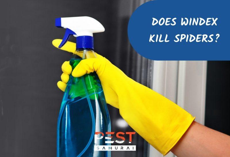 Does Windex Kill Spiders