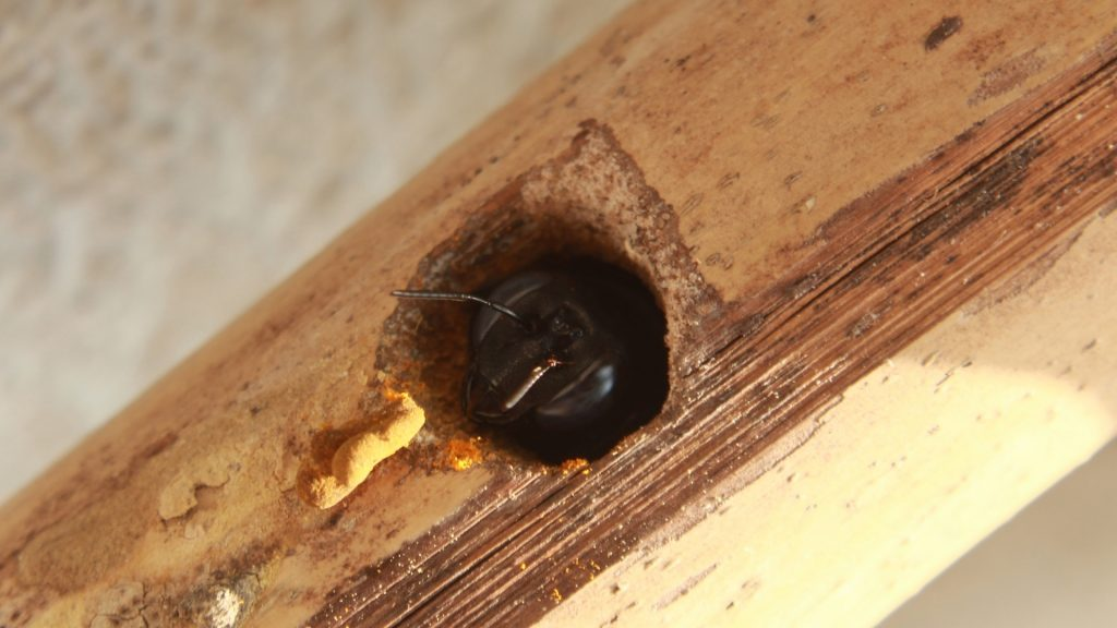 How To Get Rid of Carpenter Bees Nest