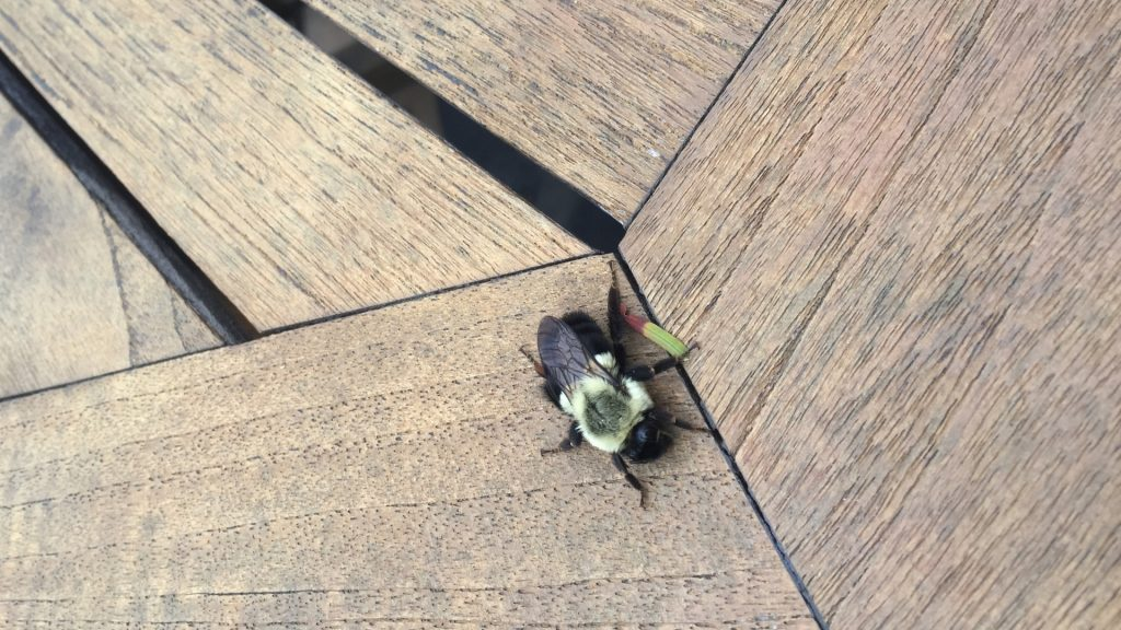 How To Get Rid of Carpenter Bees in Attic