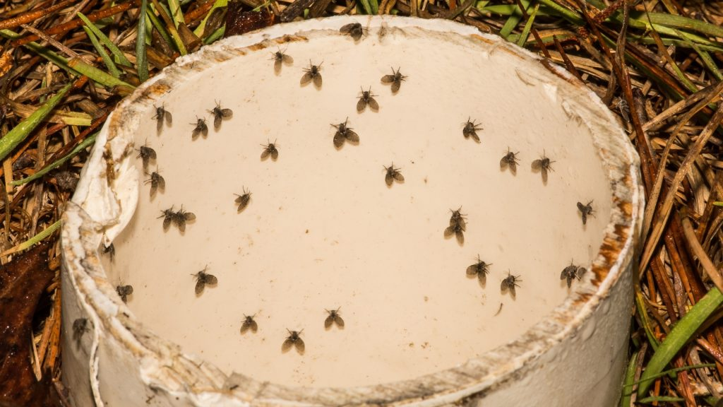 How To Get Rid of Drain Flies Outside