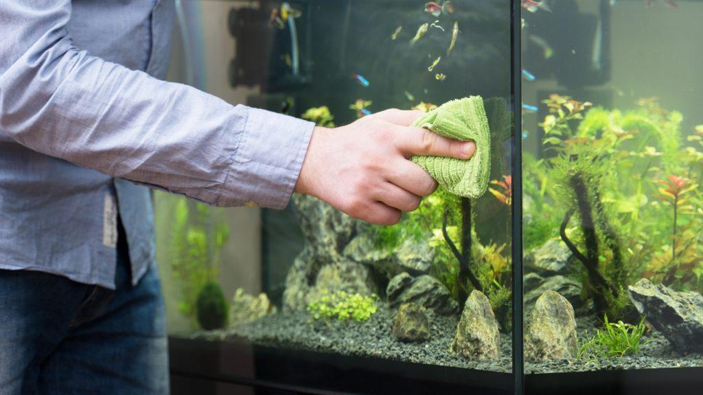 How To Get Rid of Drain Flies in Aquarium