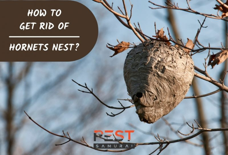 How To Get Rid of Hornets Nest