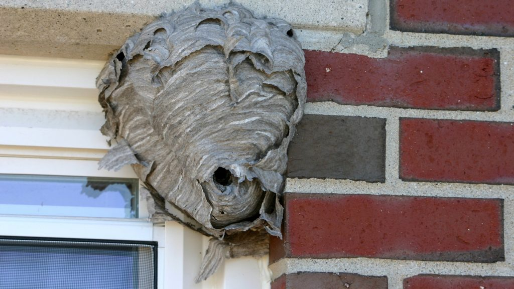 How To Get Rid of Hornets Nest in Window