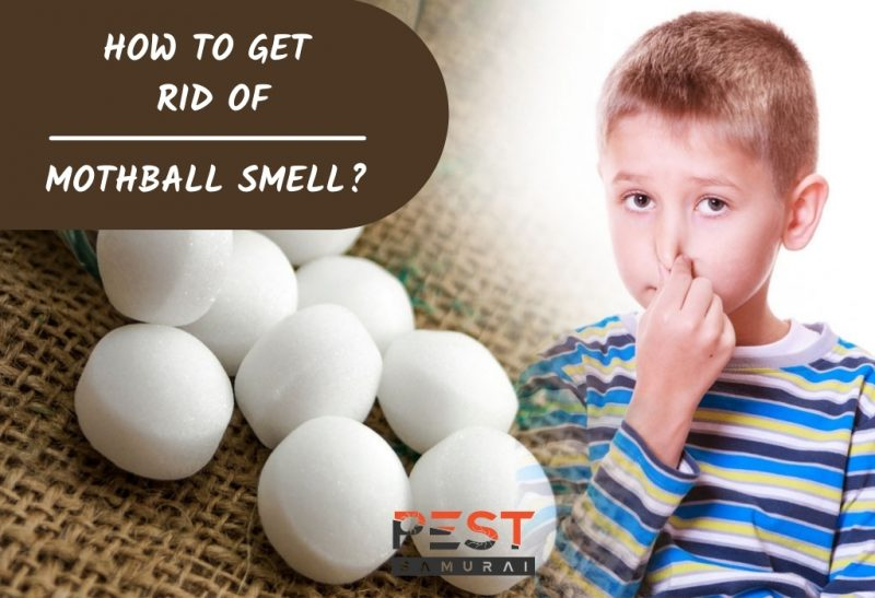 How To Get Rid of Mothball Smell