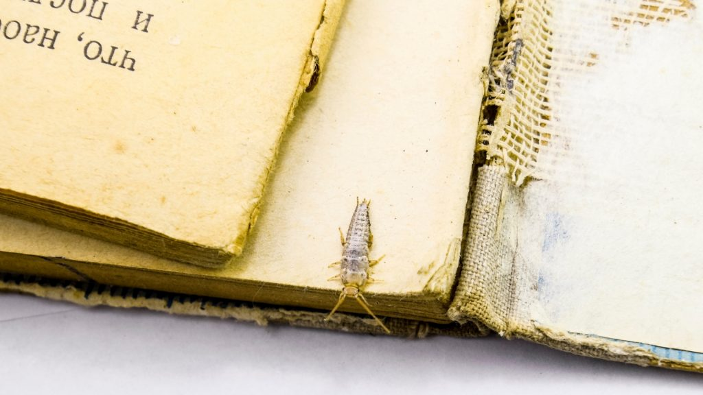 How To Get Rid of Silverfish in Books