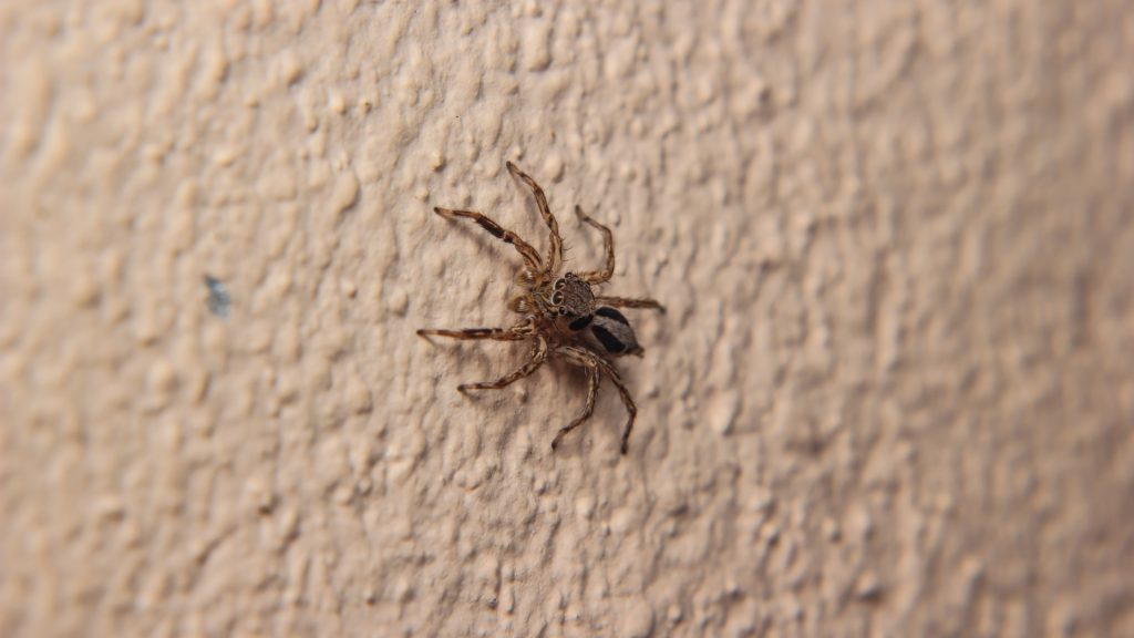 How To Kill a Spider Without Touching It