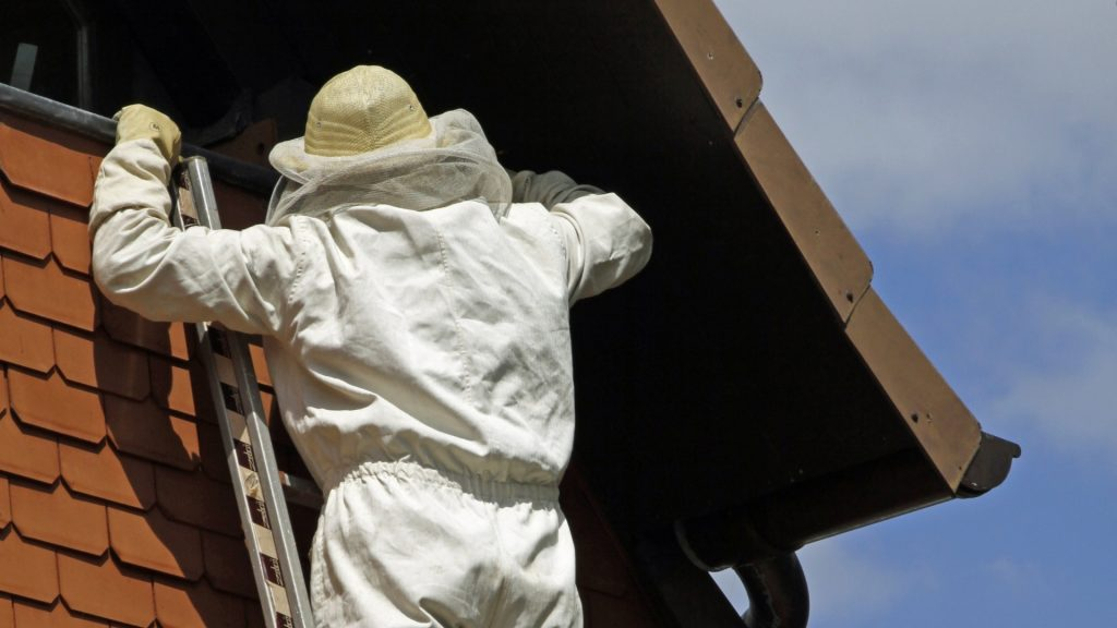 How To Remove a Hornet Nest From House