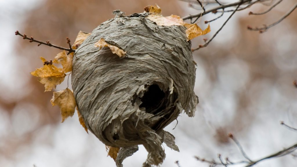 What Is a Hornets Nest Made Of