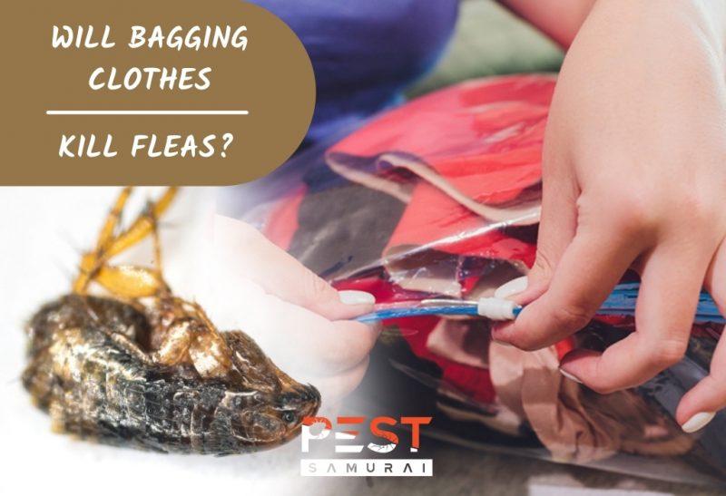 Will Bagging Clothes Kill Fleas