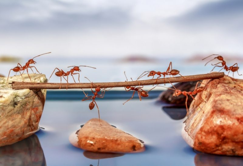 Everything You Should Know About Ants