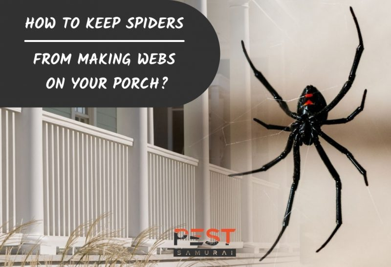 How To Keep Spiders From Making Webs on Your Porch