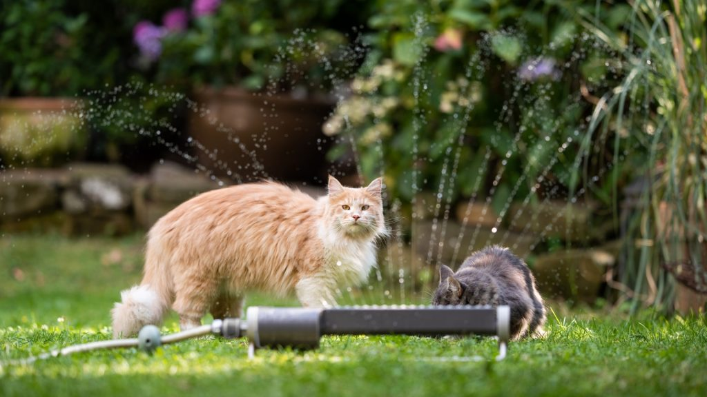 How to Keep Cats Out of Your Yard, Garden and Flowerbeds Safe Guide.