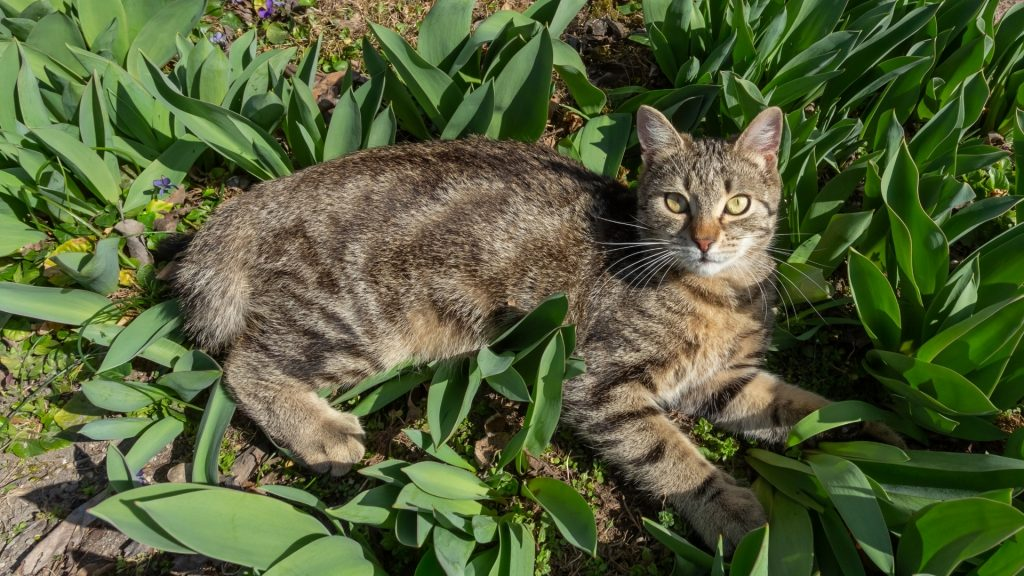 Reasons Why You Should Protect Your Yard, and Especially a Vegetable Garden from Cat and Other Pets.