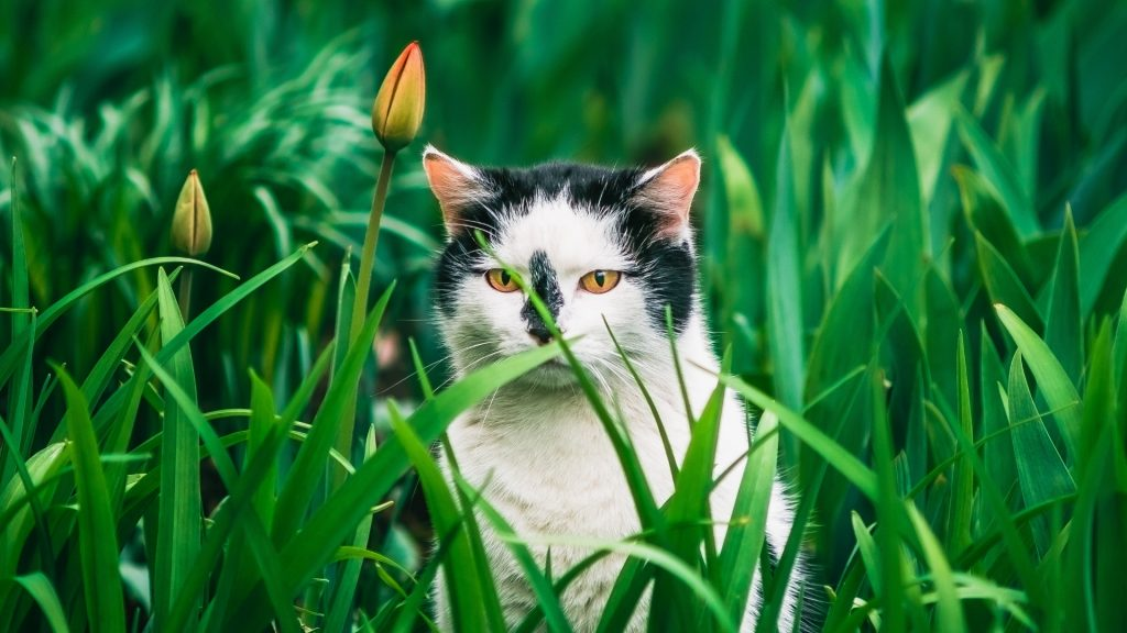 Should You Allow Your Cat to Enter Your Yard, Garden, or Flowerbeds.