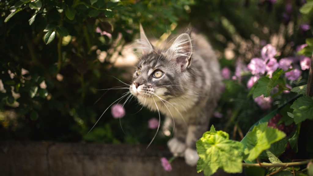 Why Are Cats Attracted to Your Yard, Garden, and Flowerbeds.
