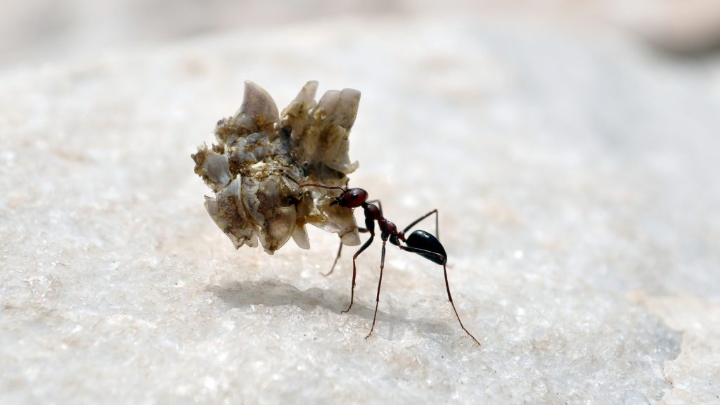 Are Ants Strong for Their Size.